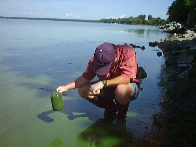 Blue green algae bloom