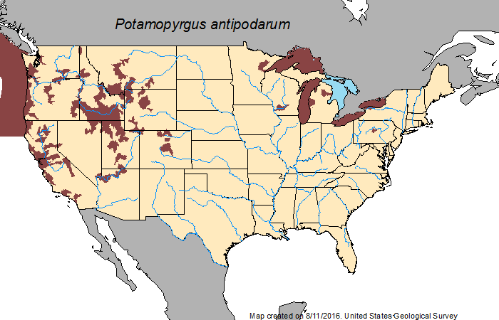 Species distribution in the United States