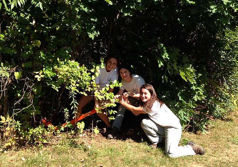 Volunteers working together to remove an invasive shrub