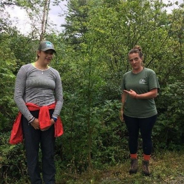 two restoration crew members pose next to a wild parsnip that is taller than them both (6 feet tall or more).