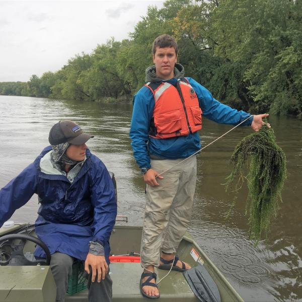 VTDEC Technician holds a sampling rake full of Hydrilla